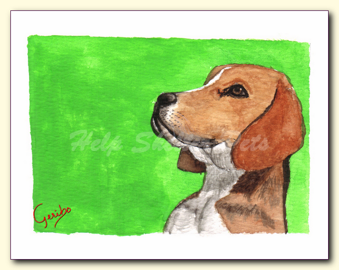 Beagle Notecard Detail