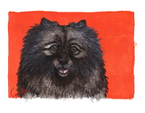 Keeshond Notecards