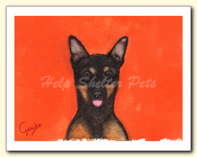 miniature pinscher notecard by dj geribo at help shelter pets detail image