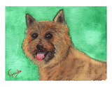 Norwich Terrier Notecards