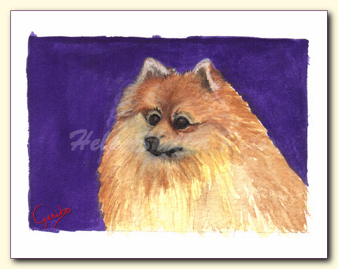 pomeranian notecard by dj geribo at help shelter pets detail image