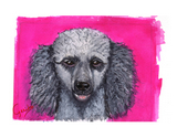 Poodle Notecards