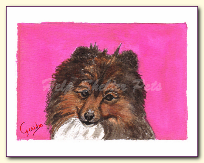 shetland sheepdog notecard by dj geribo at help shelter pets detail image