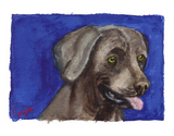 Weimaraner Notecards