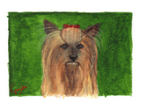 Yorkshire Terrier Notecards