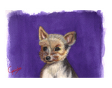 Yorkshire Terrier (puppy) Notecards