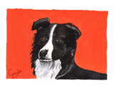 border-collie-notecard-by-dj-geribo-at-help-shelter-pets-thumbnail-image.jpg
