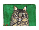 maine coon cat notecard by dj geribo at help shelter pets thumbnail image