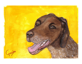 german shorthaired pointer notecard by dj geribo at help shelter pets thumbnail image