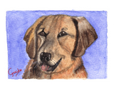 golden retriever notecard by dj geribo at help shelter pets thumbnail image