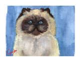 himalayan-cat-notecard-by-dj-geribo-at-help-shelter-pets-thumbnail-image.jpg