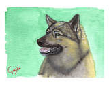 norwegian-elkhound-notecard-by-dj-geribo-at-help-shelter-pets-thumbnail-image.jpg
